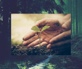 Sagwan Plant Care